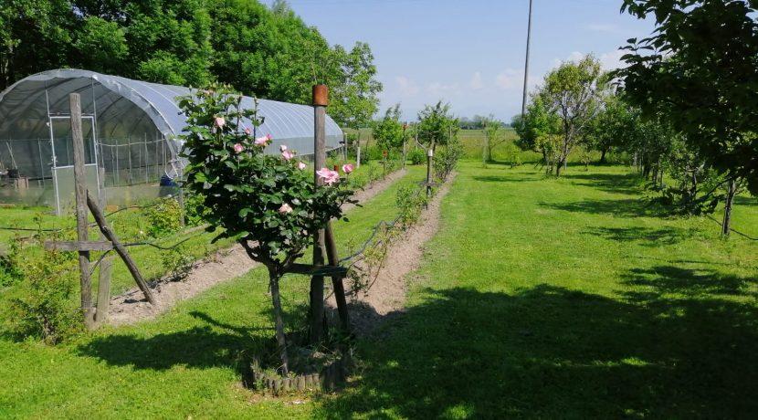 09_serra e frutteto